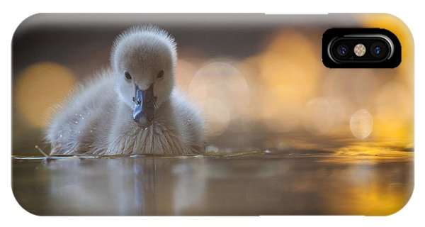 Swan iPhone Case - Black Swan by Robert Adamec