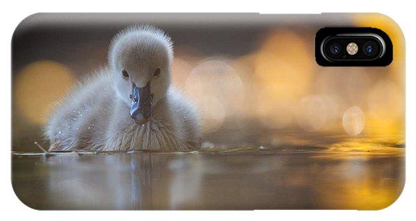Cute iPhone Case - Black Swan by Robert Adamec