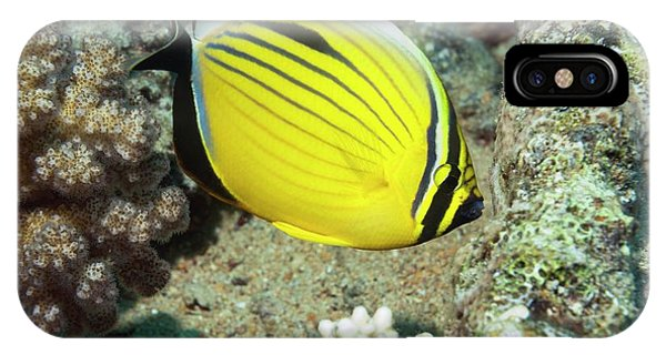 Ichthyology iPhone Case - Black-tailed Butterflyfish On A Reef by Georgette Douwma