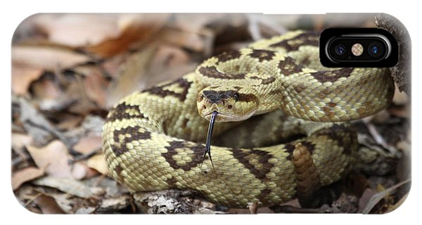Black-tailed Rattlesnake IPhone Case