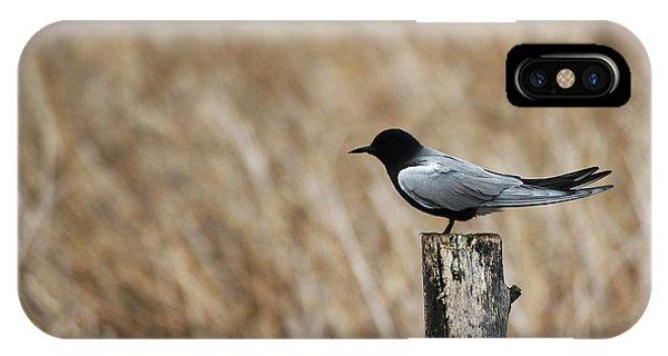 Black Tern IPhone Case