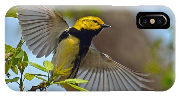 Black Throated Green Warbler IPhone Case