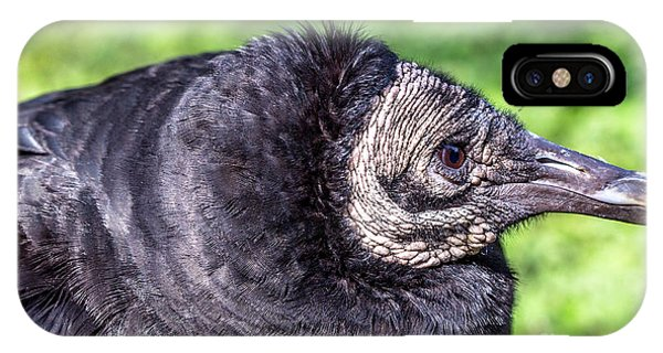 Black Vulture Waiting For Prey IPhone Case