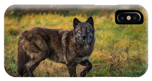 Black Wolf In Fall Colors IPhone Case