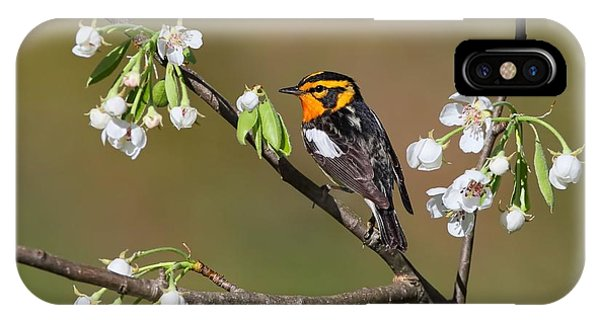 Blackburnian Warbler IPhone Case