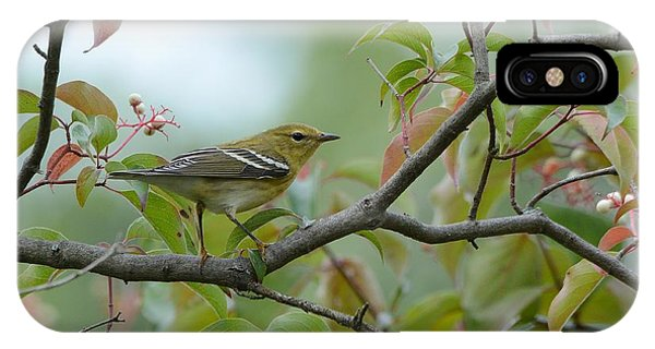 Blackpoll Warbler In The Fall IPhone Case