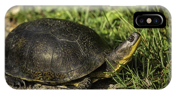 Blanding's Turtle IPhone Case