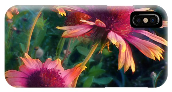 Blanket Flowers At Sunset IPhone Case