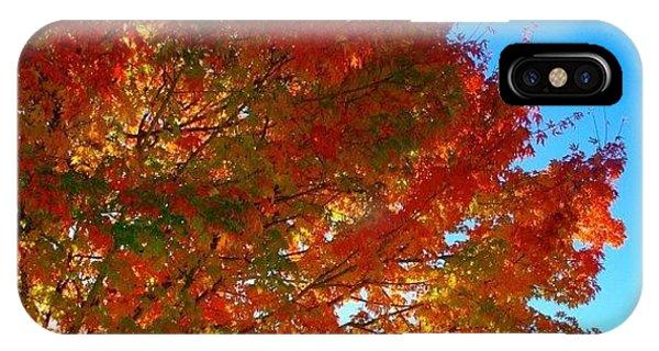 Sunny iPhone Case - Blazing Orange Maple Tree by Anna Porter