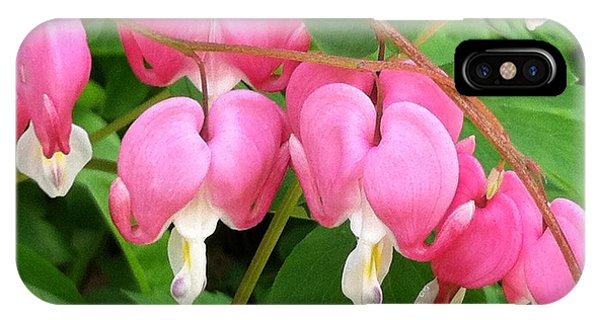 Bleeding Hearts On Parade IPhone Case
