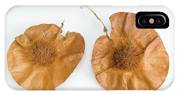 Deciduous iPhone Case - Bleedwood Tree Seed Pods by Natural History Museum, London/science Photo Library