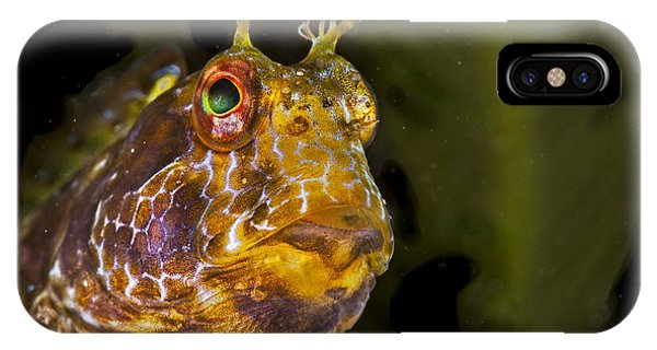 Blenny In Deep Thought IPhone Case