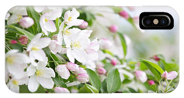Horticulture iPhone Case - Blooming Apple Tree by Elena Elisseeva