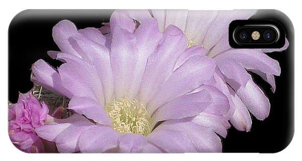 Blooming Arizona Cactus No. 1 IPhone Case