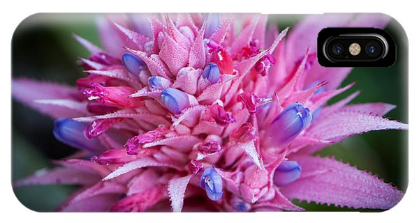 Blooming Bromeliad IPhone Case