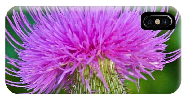 Blooming Common Thistle IPhone Case
