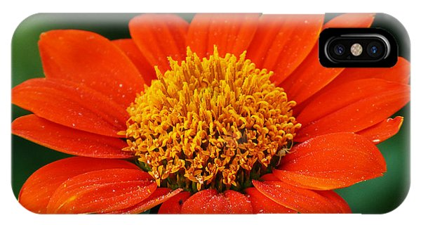 Blooming Flower IPhone Case