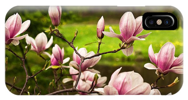 Blooming Magnolia Tree IPhone Case
