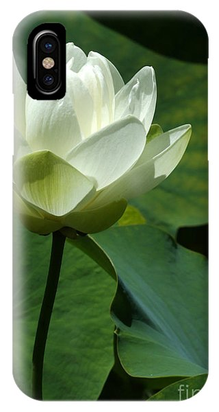 Aquatic Plants iPhone Case - Blooming White Lotus by Sabrina L Ryan