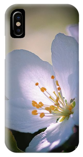 Blossom In The Sun IPhone Case