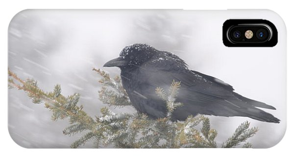 Blowin' In The Wind - Crow IPhone Case