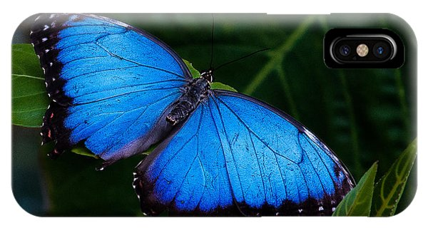 Blue And Black On Green IPhone Case