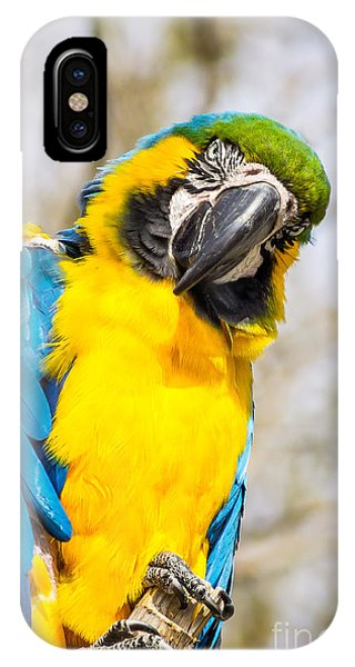 Blue And Gold Macaw Parrot IPhone Case