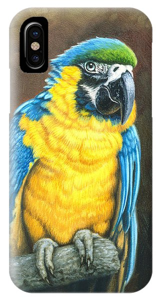 Macaw iPhone Case - Blue And Gold Macaw by Paul Krapf