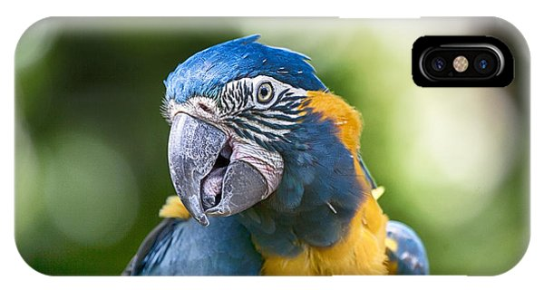 Blue And Gold Macaw V3 IPhone Case