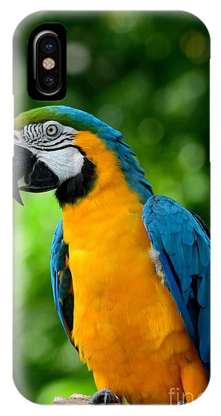 Blue And Yellow Gold Macaw Parrot IPhone Case