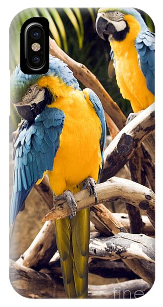 Blue And Yellow Macaw Pair IPhone Case