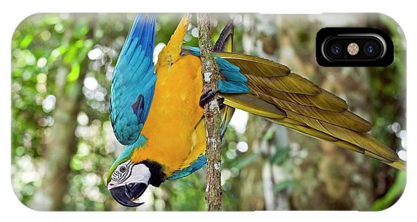 Macaw iPhone Case - Blue And Yellow Macaw by Tony Camacho/science Photo Library