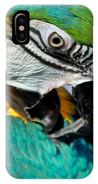 Blue And Yellow Macaw  IPhone Case