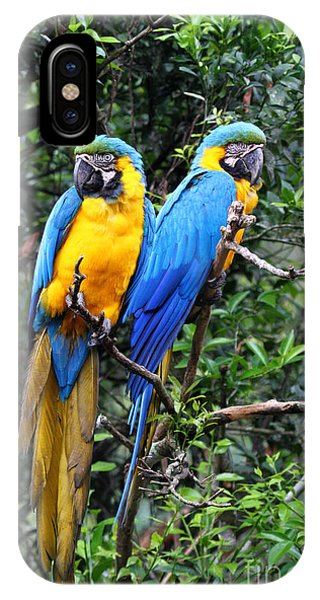 Blue And Yellow Macaws IPhone Case
