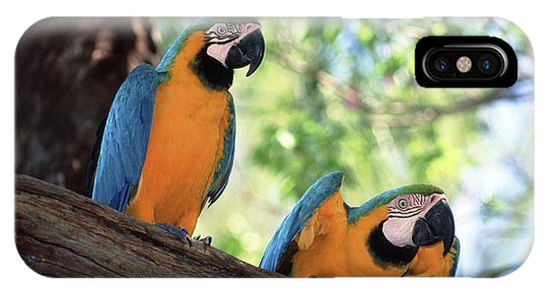 Macaw iPhone Case - Blue And Yellow Macaws by Tony Craddock/science Photo Library