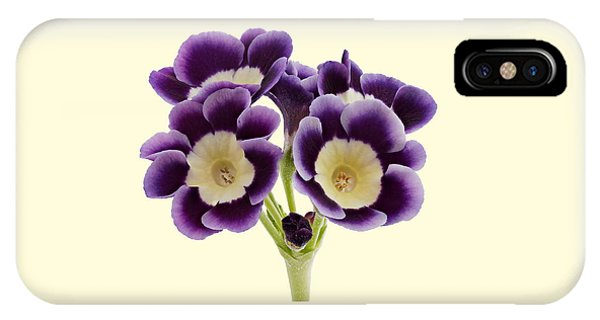 Blue Auricula On A Cream Background IPhone Case
