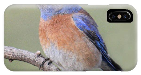 Blue Bird At Sedona IPhone Case