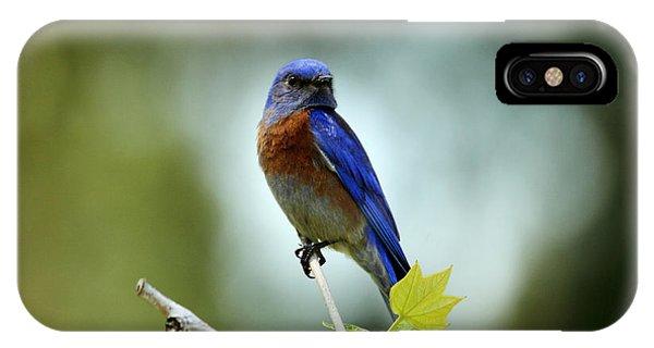 Blue Bird Halo Phone Case by Darrin Aldridge
