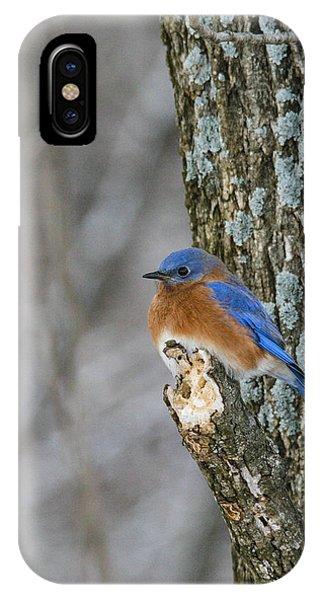 Blue Bird In Winter Phone Case by Jill Bell