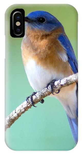 Blue Bird Portrait IPhone Case