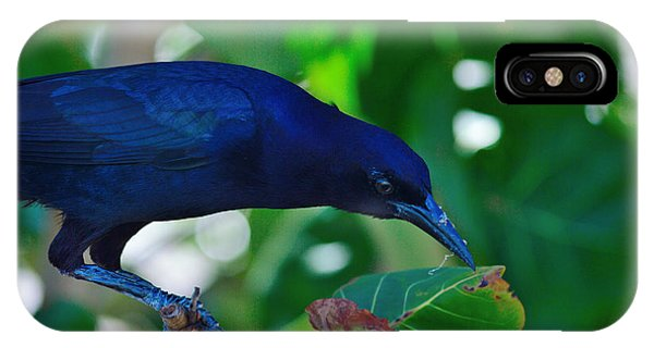 Blue-black Black Bird IPhone Case
