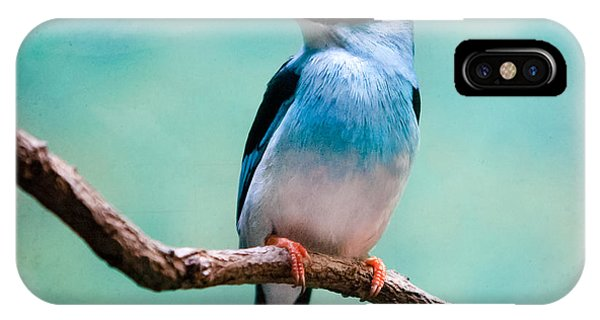 Blue Breasted Kingfisher IPhone Case