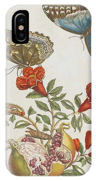 Caterpillar iPhone Case - Blue Butterflies And Pomegranate by Maria Sibylla Graff Merian