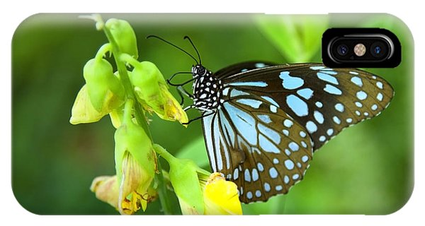 Tropes iPhone Case - Blue Butterfly In The Green Garden by Gina Koch