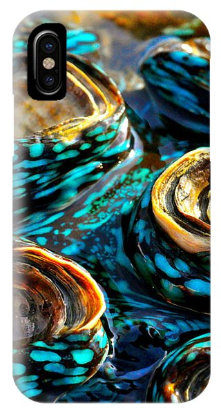 Far North Queensland iPhone Case - Blue Clams by Casey Herbert