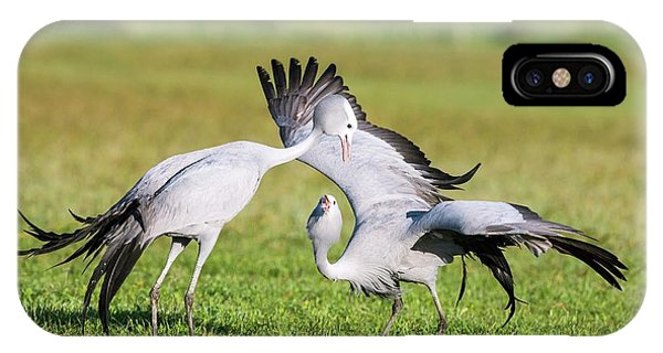 Blue Cranes Phone Case by Peter Chadwick