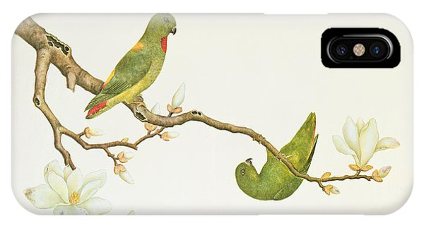 Parakeet iPhone Case - Blue Crowned Parakeet Hannging On A Magnolia Branch by Chinese School