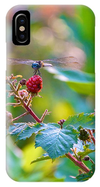 Blue Dragonfly On Berry IPhone Case