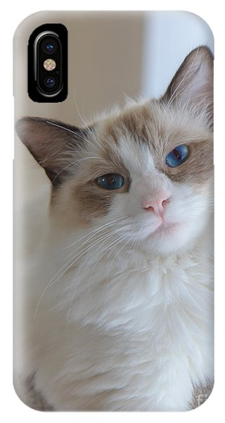 Blue-eyed Ragdoll Kitten IPhone Case