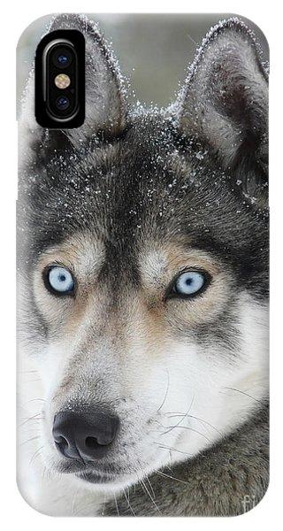 Blue Eyes Husky Dog IPhone Case